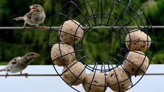 see how birds eat