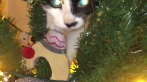 Kitten gets caught climbing the Christmas tree
