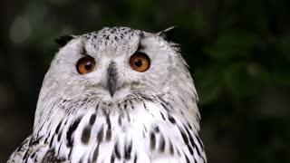 Owl animal bird nature