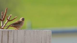 Bird Slow Motion ..