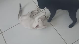 Cute cats!!.
