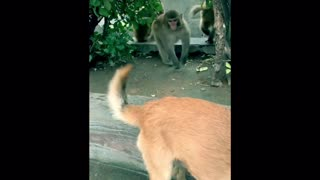 Naughty Monkey Plays Tricks on Dog