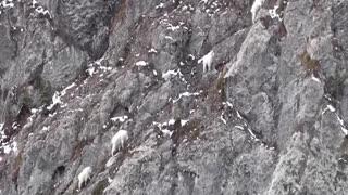 Goat Mountain Rock Climbing - Beautiful Animals