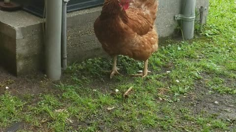 Chicken Ru