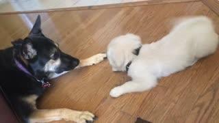 Puppy Meet n' Greet