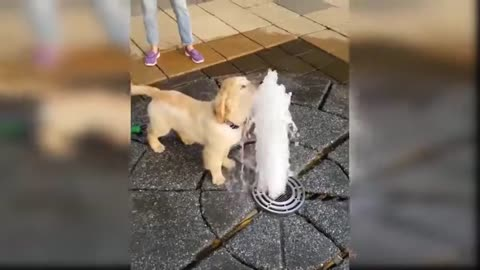 Funny Dog Videos Compilation - Baby Dogs #2020