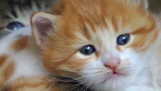 Sweet baby cat kitty yawning