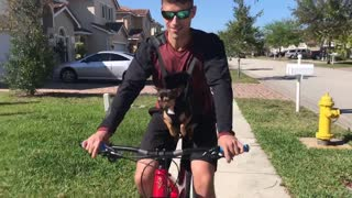 Cute puppy goes for mountain bike ride with her daddy