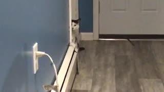 Talking cat part1