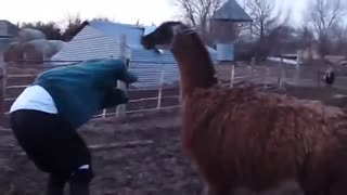 Funny unexpected animals attack.