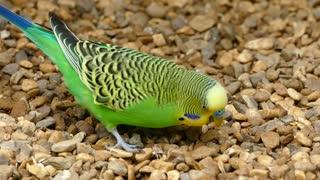 Beautiful birds Beautiful colors