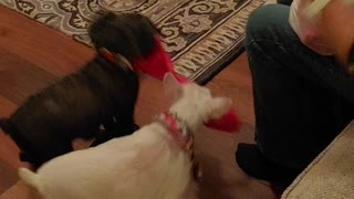 Dogs Christmas gifts