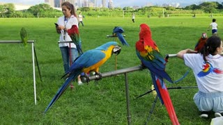 Parrots very beautiful