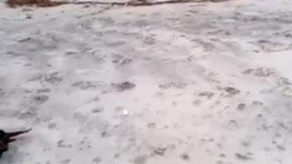 Great Dane running in Slow Motion