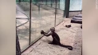 Funny animals fails laugh your ass off