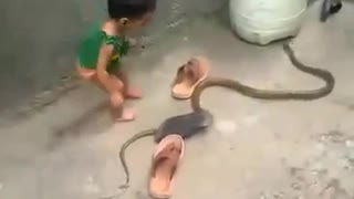 Kid Plays with a snake