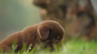 Cute little doggo :)