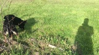 German Shepherd Finds a Turtle!