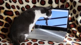 Funny cat trying to catch bird on computer