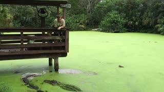 Alligator Gets Cranky at Feeding Time
