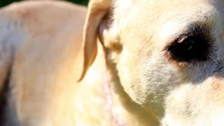 The Last Day |Saying Goodbye To My Family Dog