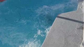 That's One Way to Jump Into a Pool