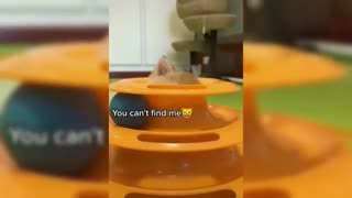 Funny Cats Compilation 2021 - Cute Cats