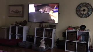 BillieB Watching Animal Shows