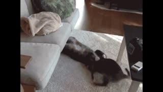 videos of funny scenes