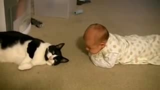 Cat meeting baby first time