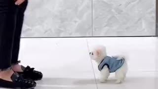 lindo perrito pequeño
