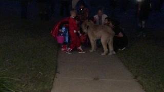 Dog Delivers Halloween Treats