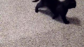 Kitty Raven 1