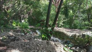 Wonderful Jungle, Forest Footage