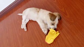lindo cachorro jugando