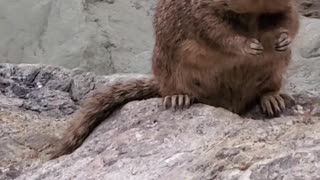 Chunky Squirrel Chows Down