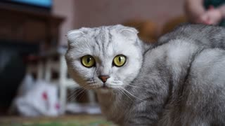 Extreme Close-up Shot of a Cat Looking Dangerous