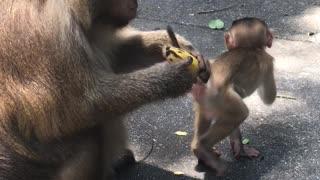 monkey picks a banana
