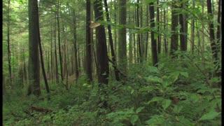 Eco-Wise Trees