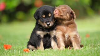 Cute Puppies Trying To Stay Together