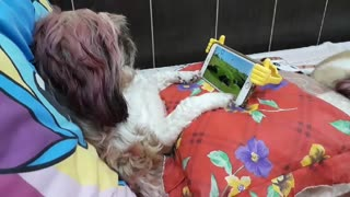 Dog Watches Favorite Show in Style
