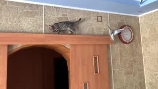 Funny cat )