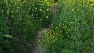 Collab copyright protection - yellow flower path biker falls