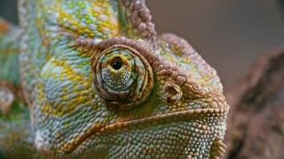 Dangerous animal from nepal national park