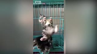 cute CATS funny video compilation from Tiktok