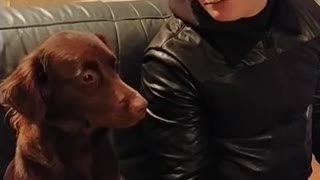 very brave dog