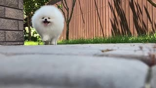 Charlie is running down the path