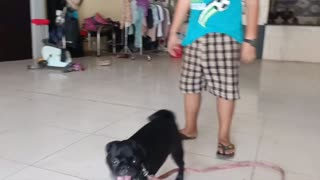 Baby Dogs - Cute and Funny Dog Videos Compilation Animal with kids