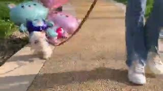 Flying cute puppy