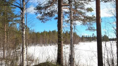 Nordic Nature Treat #4